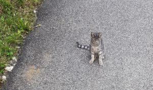 petTracer gps cat collar cat
